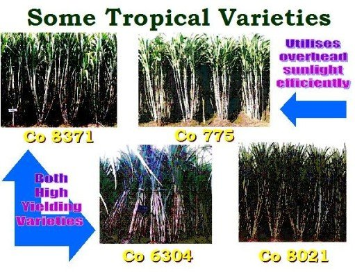 Tropical Varieties